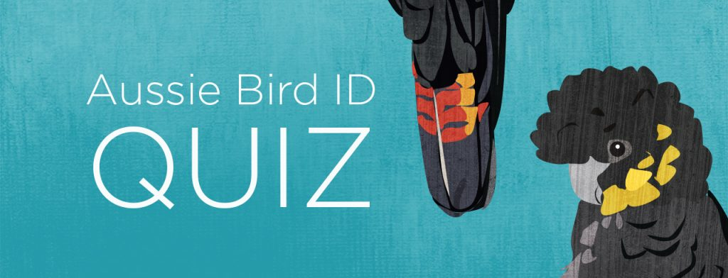 """Banner image that reads, """"Aussie Bird ID Quiz"""". To the right of the text is a bird tail hanging down, and the head and shoulders of a yellow-tailed Black Cockatoo. The background is blue."""