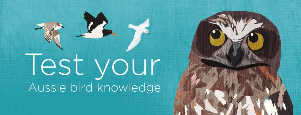 """Banner image that reads, """"Test your Aussie bird knowledge"""". Above the text are 3 small flying birds. To the right of the text is an illustration of an owl. The background is blue."""